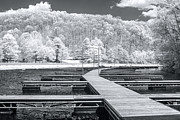 Mary Almond - Dock in infrared