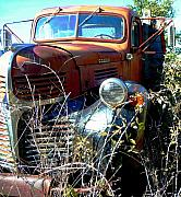 Rusty Truck Prints - Dodging Weeds Print by JoAnn SkyWatcher