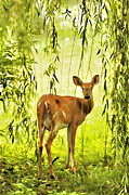 Whitetail Deer Framed Prints - Doe and Willow - D000134c Framed Print by Daniel Dempster
