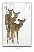 Trio Photo Originals - Doe-Ray-Meh by Michael Greiner