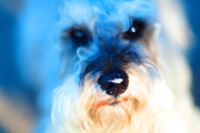 Dogs Digital Art - Dog 2 . Photo Artwork by Wingsdomain Art and Photography
