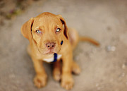 Abandoned Pets Photos - Dog Abandoned by Manuel Orero Galan