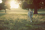 Playful Dog Prints - Dog Against Sunlight Print by Olive Juice Photography