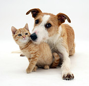 Mutt Photos - Dog And Kitten by Jane Burton