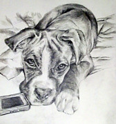 Boxer Dog Drawings Prints - Dog And Phone Print by Tanya Patey