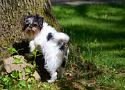 Mutt Photos - Dog and Tree by Jeffrey Platt