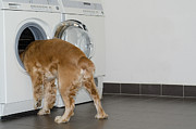 Hair-washing Framed Prints - Dog and washing machine Framed Print by Mats Silvan