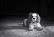 Stone Floor Photos - Dog black and white by Jane Rix
