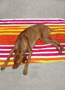Beach Towel Prints - Dog Days Of Summer Print by Marilyn Horst