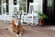 Rocking Chairs Framed Prints - Dog days of summer Framed Print by Toni Hopper