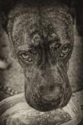 Dog Portraits Digital Art - Dog Days by Off The Beaten Path Photography - Andrew Alexander