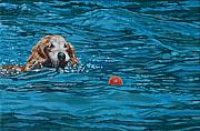 Dog Swimming Paintings - Dog Fetches Ball by Allan OMarra