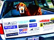 Stickers. Photos - Dog Guards Bumper Stickers by Chuck Taylor