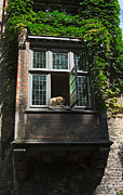 Sleeping Dog Framed Prints - Dog in a Window Above the Canal in Bruges Belgium Framed Print by Louise Heusinkveld