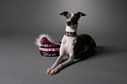 Pet Collar Posters - Dog In Sitting Position With Diva Bowl Poster by Chris Amaral