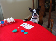 Dogs Playing Poker Prints - Dog Playing Poker Print by Spike Burrows