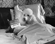 Animal Companion Framed Prints - Dog Reading in Bed Framed Print by M E Browning and Photo Researchers