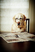 Reading Of Image Prints - Dog Reading The Newspaper And Wearing Glasses Print by Tony Garcia