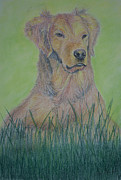 Dog Print Pastels Framed Prints - Dog Resting Framed Print by Jose Valeriano