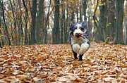 Tree Leaf Photo Prints - Dog Running In Forest Print by Regarder tout autour de soi
