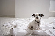 Pet Collar Posters - Dog Sitting On Bathroom Floor Amongst Shredded Lavatory Paper Poster by Chris Amaral