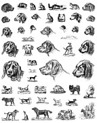 Greyhound Framed Prints - Dog Sketches Framed Print by Granger