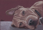 Colored Pencil Drawings Prints - Dog Tired Print by Stacey Jasmin
