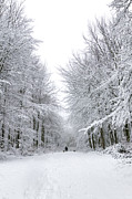 Dog Walking Prints - Dog walk in the snow Print by Richard Thomas