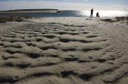 Dog Walking Prints - Dog Walkers On Sandy Beach In Chatham Print by Keenpress