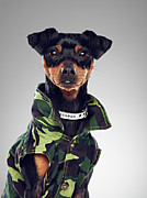 Gray Jacket Prints - Dog Wearing Collared Jacket Print by 24frames