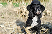 Dog With A Hat Print by Mats Silvan