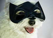 Panting Dog Posters - Dog With Cat Mask Poster by Carolyn Hebbard