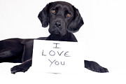 No Love Posters - Dog With I Love You Message Poster by Juliet White