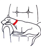 Sleeping Dog Drawings Prints - Dog with Red Collar Print by Anita Stone
