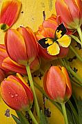 Insect Photos - Dogface butterfly and tulips by Garry Gay
