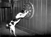 Animal Games Prints - Doggy Darts Print by N Smith