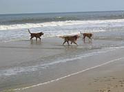 Dogs At The Beach Print by Jim Vansant