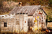 Hunting Cabin Photo Framed Prints - Dogs back at the Cabin Framed Print by Randall Branham