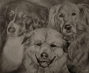 Duane Mathes - Dogs