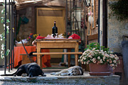 Lazy Dogs Prints - Dogs of Tuscany Print by Zack Stern