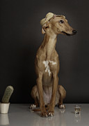 Whippet Prints - Dogs Print by Rainer Elstermann