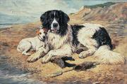 Springer Spaniel Paintings - Dogs Watching Bathers by John Emms