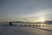 Defence Art - Dogsledge, Northern Greenland by Louise Murray