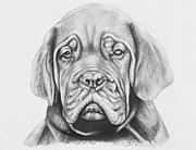 Pup Drawings Posters - Dogue de Bordeaux Dog Poster by Lena Auxier