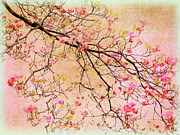 Dogwood Blossom Framed Prints - Dogwood  Canvas Framed Print by Jessica Jenney