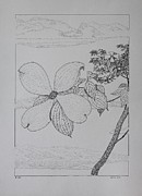 Floral Drawings Originals - Dogwood  by Daniel Reed