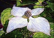 Dogwood Days Print by Judi Bagwell
