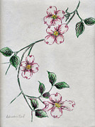 Pink Blossoms Drawings Posters - Dogwood Dream Poster by Deborah Willard