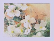 Sizes Painting Prints - Dogwood Dreams Print by Bettye Malone