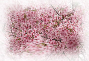 Botanica Prints - Dogwood in Motion Print by Fred Lassmann